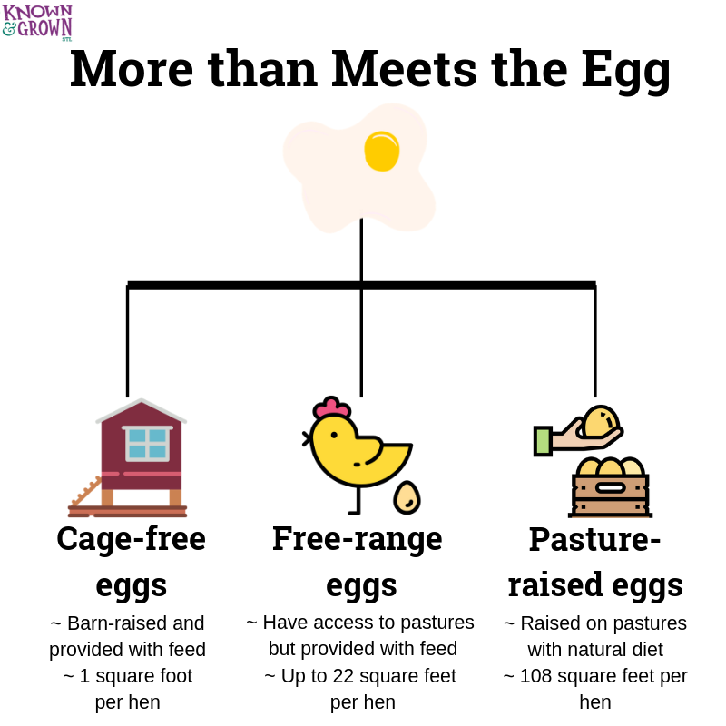 guide to confusing egg labels